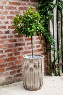 Set of Two Poly Rattan Planters Natural