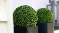 Topiary Buxus Ball Realistic Artificial Green Bush