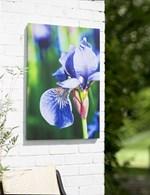 Vibrant Flower Outdoor Art